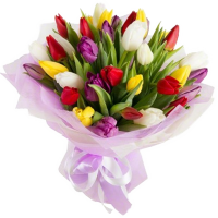 A-bouquet-of-29-tulips d2460 239895674